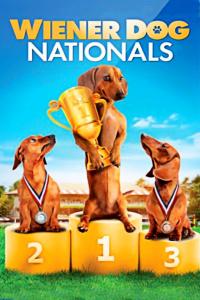 狗狗国际大赛