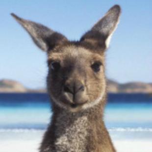 HiAustralia