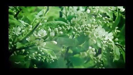 音乐短片 轻音乐  蝶恋花 -梦之旅组合