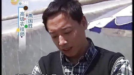 燕国胜——4.15威远甜瓜不大论个卖