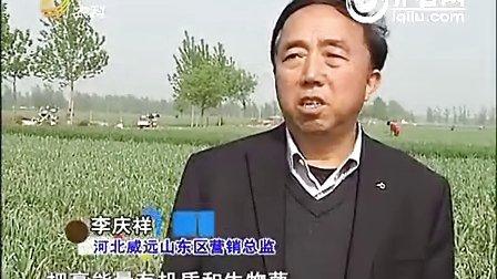 肥料试验有成绩 重茬病害不见了
