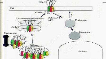 惠汝太:基因改变与高血压的发生发展及临床意义