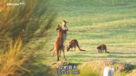 来人啊!袋鼠打架好可怕!【脑残游记】之澳洲3