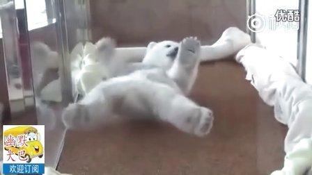 搞笑可爱 小北极熊怎么也翻不过身了 急人呢。