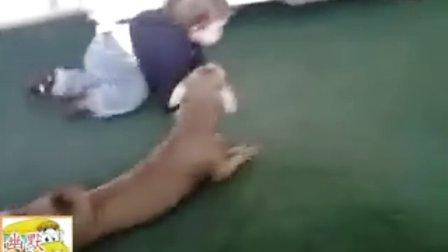 搞笑 小狗模仿宝宝爬行,笑死人了