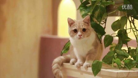 猫主吉祥猫酒店幽默短片之吃的艺术