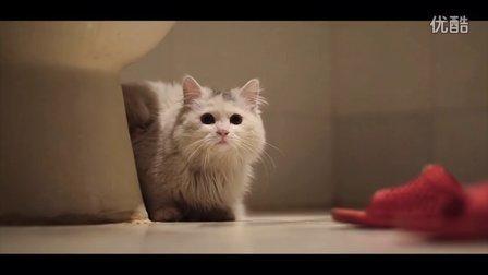 猫主吉祥猫酒店幽默短片之厕所遇鬼