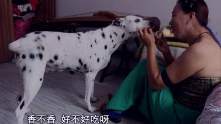 聊斋新传-人狗情缘(4集)