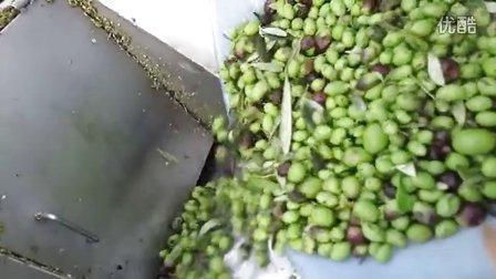 自动化橄榄破碎机,橄榄榨汁机,橄榄压榨机,橄榄油生产线,橄榄油设备,橄榄油如何压榨的?