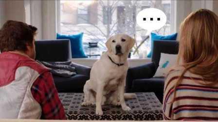 汪星人爱情喜剧《毛小孩选边站/狗狗监护权 Who Gets the Dog?》高清中字中文台湾版预告:绝望的主妇Gaby伊娃·朗格利亚|艾丽西亚·希尔维斯通