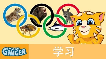 会说话的金杰猫-动物奥运会&宫殿城堡游记