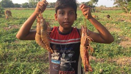 印度虽然落后,但是你绝没见过罕见的巨虾!