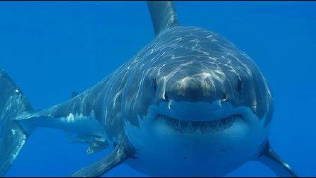 【落尘】海底大猎杀 98级海妖1口1鲨鱼,