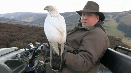 獵奇 第一百二十八集  罗伊的白色猎鹰
