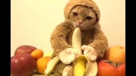 橘猫吃香蕉, 生无可恋的样子让人笑到肚子痛