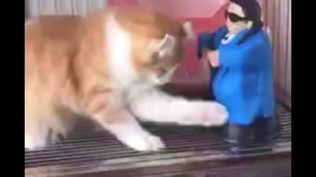 猫: 这是什么玩意呢, 太污了
