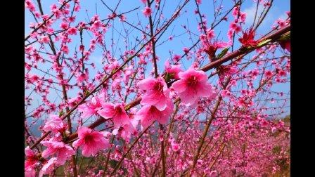 梦里水乡——桃花节