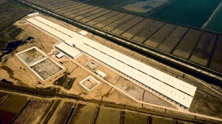 杨林柏: 猪场如何构建和执行其强大的生物安全体系