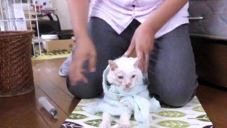 好心老爷爷捡来一只流浪猫, 一个月后猫咪变成这样