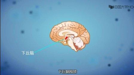 8.2 男性不育的病因及预防( 男性生殖健康4集)(建设身体公众号:jiansheshenti)