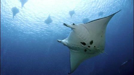 凯欣亚 - 潜水旅程的意义