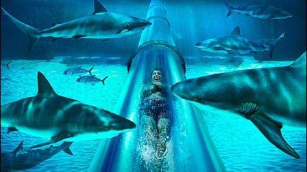 某五星级大酒店还配套有鲨鱼滑水道, 看着真刺激
