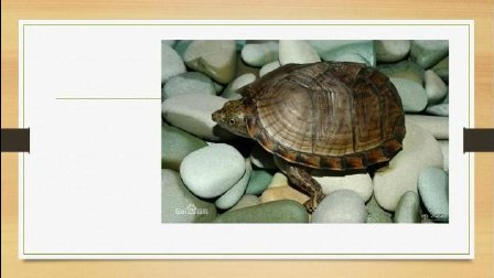 网上那些误人子弟的龟知识, 你相信了吗?