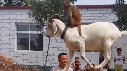 农村小动物表演