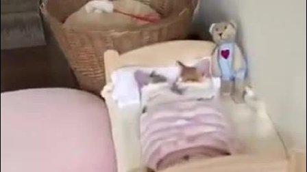 两只可爱的小猫在睡觉的时候互相拥抱
