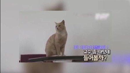 韩国有一只猫, 每天都会按时去大学里上课, 还会坐电梯