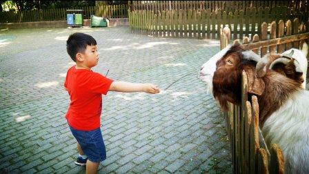 【快6岁】5-17哈哈在动物园喂养小羊MAH06927
