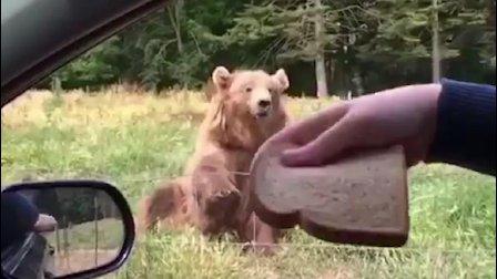 大哥, 你是熊, 你不是宠物, 懂吗!