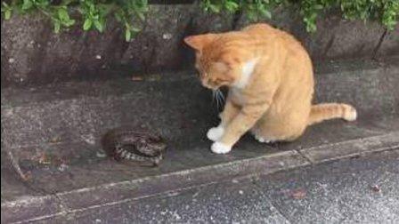 猫: 咦, 有跟绳子还会动? 蛇: 今天出门没看黄历