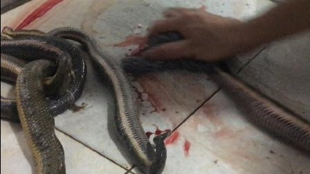 这次出去吃个蛇碌, 还跑进厨房看看师傅怎么宰蛇的