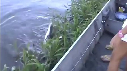 钓到一条不知名的鱼