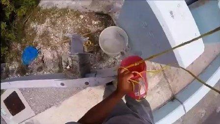 捞螃蟹时意外发现有大龙虾