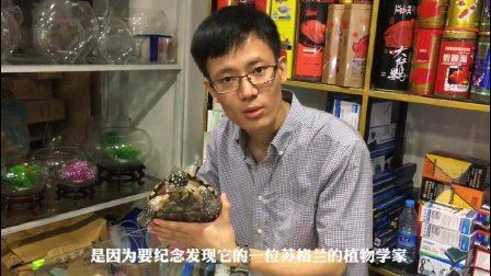 罕见成体斑点池龟现身圈楼花鱼市场, 店长亲自带您探寻究竟
