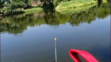 树林好钓鱼