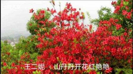 王二妮 - 山丹丹开花红艳艳