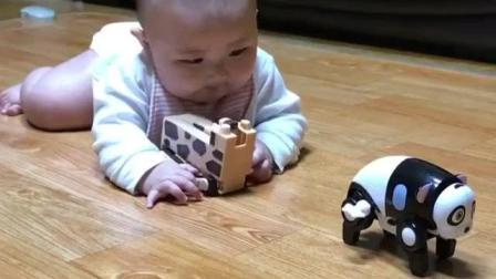刚学会爬的小宝宝, 一看到玩具就兴奋地想爬去拿, 肉嘟嘟的真可爱