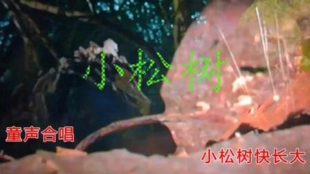 经典老歌回顾 电影《雷锋》插曲《小松树 》