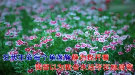 一首深情动听的歌《那些花儿》满满的都是回忆 演唱 安贫乐道