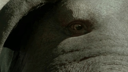 这么大的猪还是第一次见, 韩国乡下怪兽电影《玉子》