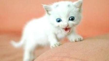 一个只有喵喵叫的视频, 这样的喵叫声太洗耳朵了