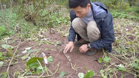 一个老农民设计的土陷阱, 这玩意荒野求生逮野兔野鸡效果不错