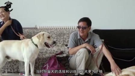 帮助人类的最多的导盲犬, 他们的无言可以让亿人感动