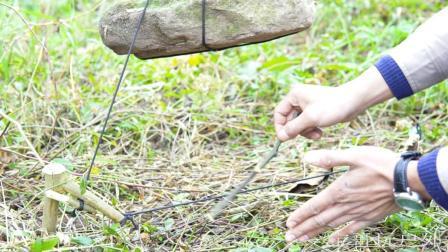 求生技能科普, 一个落井下石陷阱, 捕捉山鼠效果非常棒
