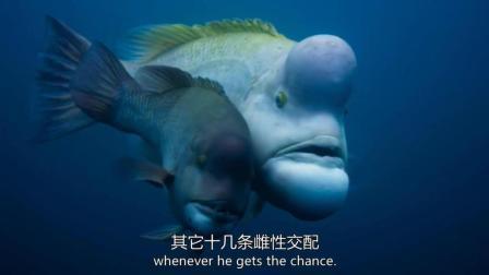 海底世界, 神奇动物, 会变性别的鱼