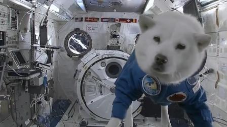 太空狗!这是自由的感觉