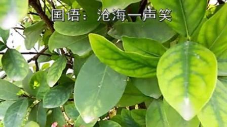 沧海一声笑【国语】杨文